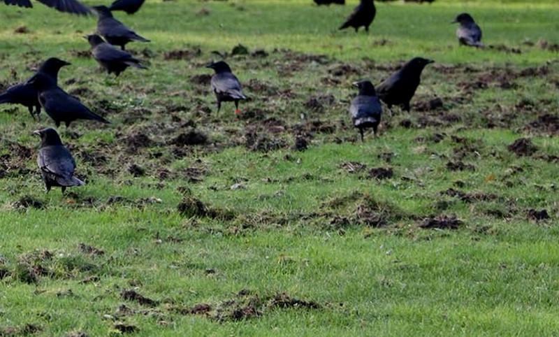 Last van vogelschade
